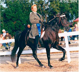 "A barefoot, naturally gaited Tennessee Walker, ""Papa,"" owned and ridden by FOSH member Anita Howe."